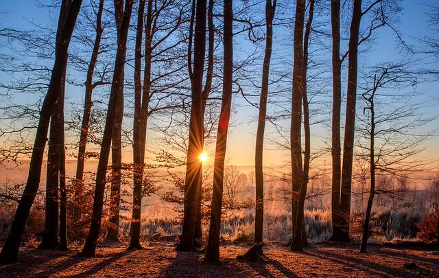 les, zima, západ slunce