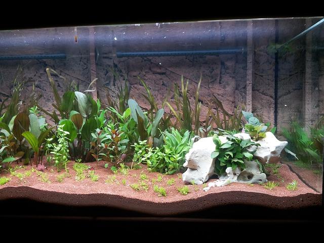 akvárium a vodní rostliny