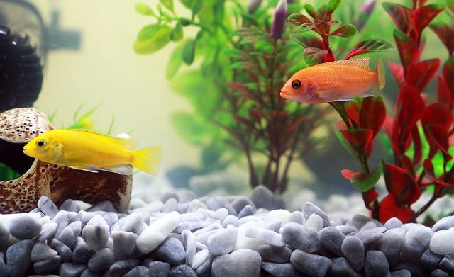 žlutá a oranžová ryba