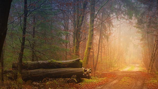 kmeny stromů